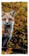 Red Fox In Fall Colors Hand Towel
