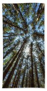Red Pines 1 Hand Towel