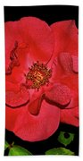 Red Rose With Dewdrops 038 Bath Towel