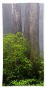 Redwoods By Crescent City 7 Bath Towel