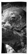 Sea Lion Pup Hand Towel by Edward Fielding