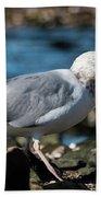Seagull Carrying Snail Bath Towel