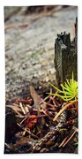 Small Spruce Growing On An Old Tree Stump Bath Towel