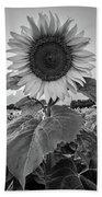Sunflowers 10 Hand Towel