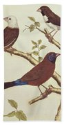 White Headed Munia, Double Coloured Seed Eater And Violet Eared Waxbill Bath Towel