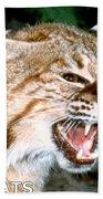 Wildcats Mascot 4 Bath Towel