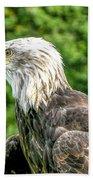 Wisconsin Bald Eagle Bath Towel