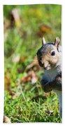 Your Friendly Neighborhood Squirrel Bath Towel