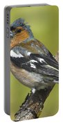 Male Chaffinch Portable Battery Charger