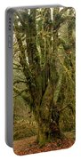 Moss-covered Big Leaf Maple Tree Portable Battery Charger