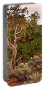 Weathered Tree Sunrise Canyon Dechelly Portable Battery Charger