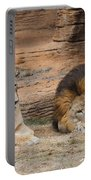 African Lion Couple 3 Portable Battery Charger