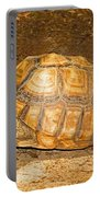 African Spur Thigh Tortoise Portable Battery Charger