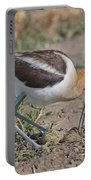 American Avocet And Eggs Portable Battery Charger