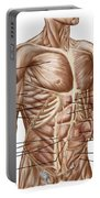 Anatomy Of Human Abdominal Muscles Portable Battery Charger