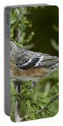 Bay-breasted Warbler Portable Battery Charger