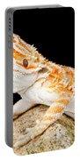 Bearded Dragon Pogona Sp. On Rock Portable Battery Charger