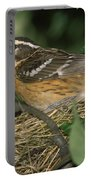 Black-headed Grosbeak Female Portable Battery Charger