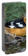 Black-headed Grosbeak Male Portable Battery Charger