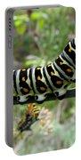 Black Swallowtail Caterpillar Portable Battery Charger