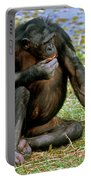 Bonobo Portable Battery Charger