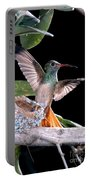 Buff-bellied Hummingbird At Nest Portable Battery Charger