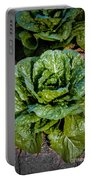 Butterhead Lettuce Portable Battery Charger