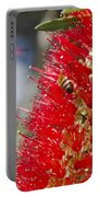 Callistemon Citrinus - Crimson Bottlebrush Portable Battery Charger
