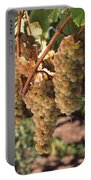 Chardonnay Grapes In Vineyard, Carneros Portable Battery Charger