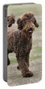 Chocolate Labradoodle Running In Field Portable Battery Charger
