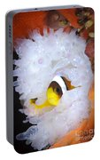 Clarks Anemonefish In White Anemone Portable Battery Charger