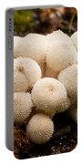 Common Puffball Mushrooms Lycoperdon Perlatum Portable Battery Charger