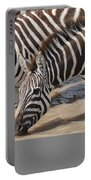 Common Zebras Drinking Water Portable Battery Charger