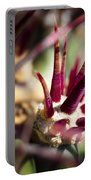 Crown Of Thorns Portable Battery Charger by Kelley King