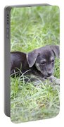 Cute Puppy In The Grass Portable Battery Charger by Jannis Werner