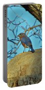 Eastern Bluebird 3 Portable Battery Charger