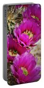 Engleman's Hedgehog Cactus Portable Battery Charger