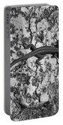 European Wall Lizard In Desenzano. Lago Di Garda Portable Battery Charger