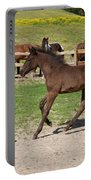 Foal Portable Battery Charger