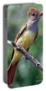 Great Crested Flycatcher With Captured Portable Battery Charger