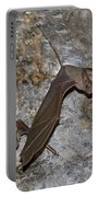 Greater Mouse-tailed Bat Rhinopoma Microphyllum Portable Battery Charger