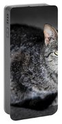 Grey Cat Portrait Portable Battery Charger