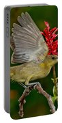 Hooded Oriole Juvenile Portable Battery Charger