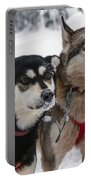 Husky Dogs Pull A Sledge  Portable Battery Charger by Lilach Weiss