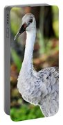 Juvenile Sandhill Crane Grus Canadensis Pratensis II Usa Portable Battery Charger