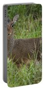 Kirks Dik-dik Portable Battery Charger
