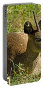 Klipspringer Antelope Portable Battery Charger