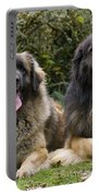 Leonberger Dogs Portable Battery Charger