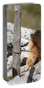 Little Marmot Portable Battery Charger
