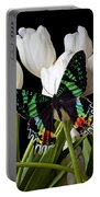 Madagascar Butterfly Portable Battery Charger